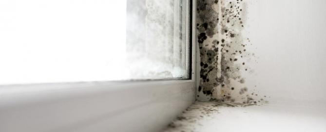 Eco-Luft Innenräume Schimmelsanierung Analysenservice